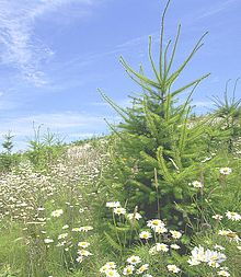 Reforestation - Wikipedia