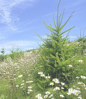 Biodiversity on a 15-year-old reforested plot ...