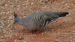 Bird 2 (31210920076).jpg