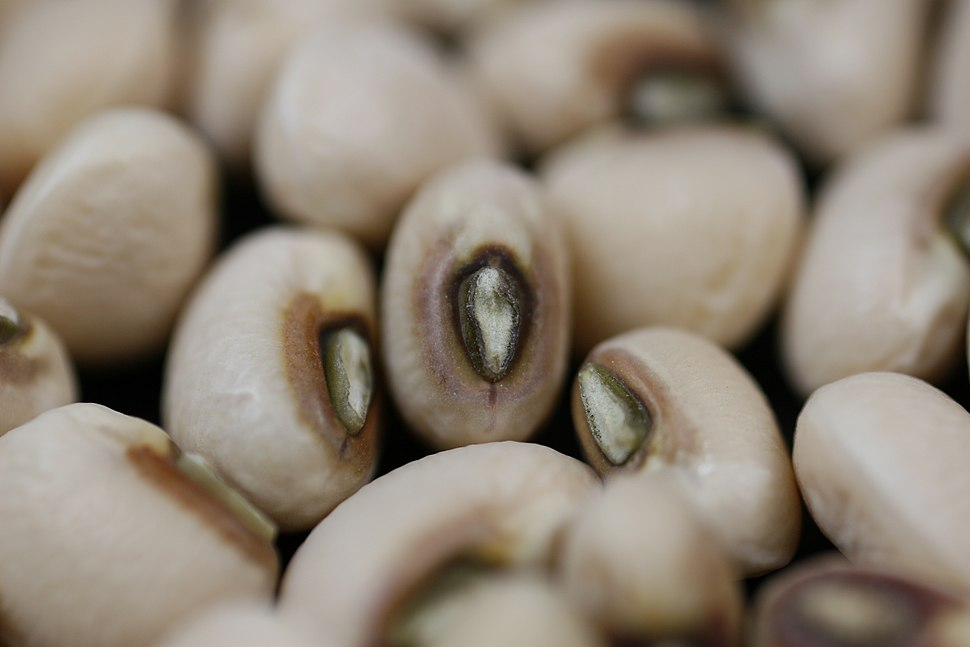 Black-eyed-pea-closeup