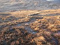 Bogs, Arachan - geograph.org.uk - 330821.jpg