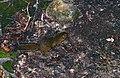 Bornean Mountain Ground Squirrel (Dremomys everetti) (14666987216).jpg