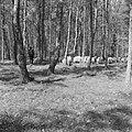 Bosbescherming, parken, herders, schaapskudden, Nationaal Park Veluwezoom, Zypen, Bestanddeelnr 165-0811.jpg
