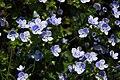 Botanic garden - Cluj-Napoca (5676869017).jpg