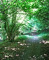 Boudica's Way - a shady path - geograph.org.uk - 1378761.jpg