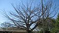 Branches (2230447914).jpg