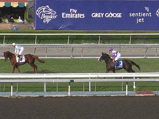 Red Rocks (horse) Irish-bred Thoroughbred racehorse