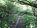 Bridleway near Down Farm, Chilmark 3 - geograph.org.uk - 877768.jpg