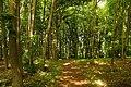 Brochterbeck Naturschutzgebiet Osterklee 19.JPG