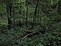 Bubovice-Srbsko - panoramio (46).jpg