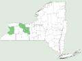 Buchnera americana NY-dist-map.png
