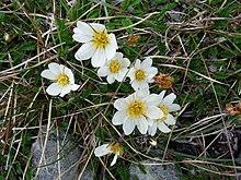 The Burren - Wikipedia