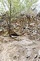 Butcher Jones Trail to Pinter's Point Loop, Tonto National Park, Saguaro Lake, Ft. McDowell, AZ - panoramio (150).jpg