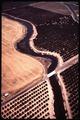 CANAL IRRIGATES CITRUS RANCHES - NARA - 542713.tif