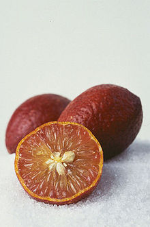 CSIRO ScienceImage 7979 Blood limes.jpg