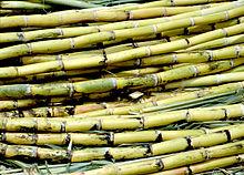 Срезанный сахарный тростник