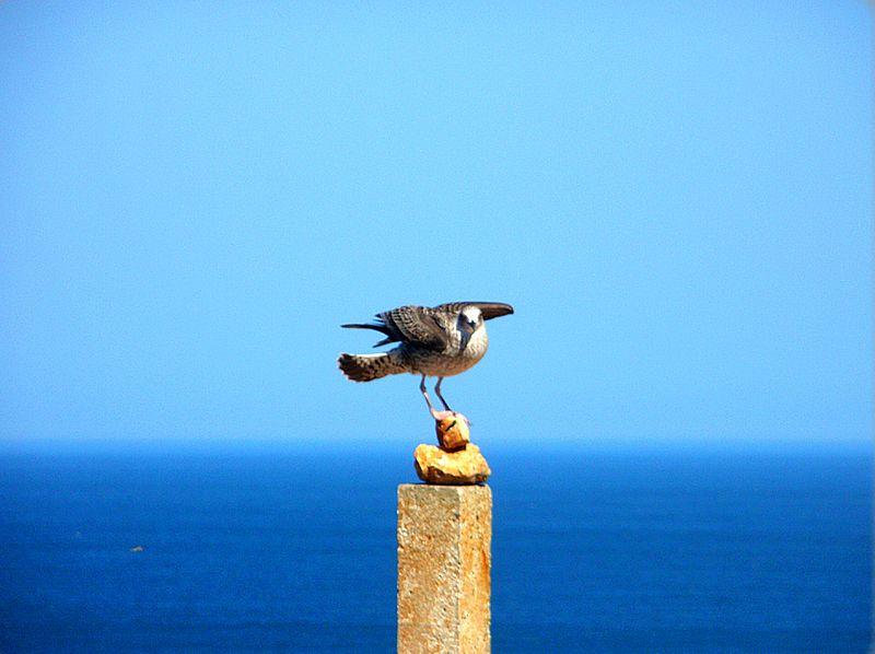 File:Cabo de San Vicente (Portugal) (25011135260).jpg
