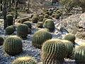 Cadereyta Botanical garden (5761433928).jpg