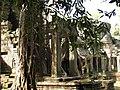 Cambodia 08 - 158 - Preah Khan (3236335111).jpg