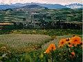 Campo de flores nas proximidades de Ollantaitambo, Peru.jpg