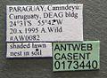 Camponotus renggeri casent0173440 label 1.jpg