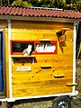 Cat steps (39283731445).jpg