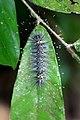 Caterpillar (2872469461).jpg