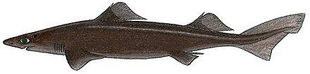 Wikipedia:WikiProject Sharks/Watchlist - WikiVisually