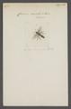 Cerceris - Print - Iconographia Zoologica - Special Collections University of Amsterdam - UBAINV0274 043 11 0049.tif