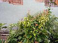 Chameleon hide in plants.jpg
