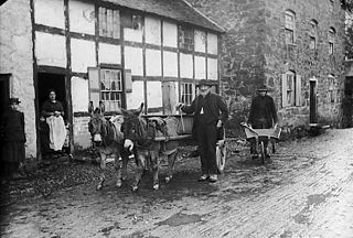 Charles and his mules, Meifod