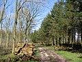 Cherry Wood, Sledmere - geograph.org.uk - 357432.jpg