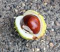 Chestnuts,broken.jpg