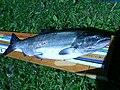 Chinook salmon (Garden R) 1.JPG