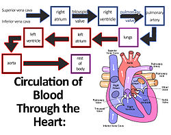 meaning of heart