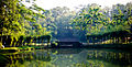 City Rainforest, Johor Bahru.jpg