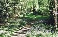 Clamp Rough - geograph.org.uk - 446256.jpg