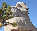 Climber in Hidden Valley Campground - 25063868672.jpg