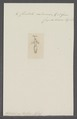Cliodita caduceus - - Print - Iconographia Zoologica - Special Collections University of Amsterdam - UBAINV0274 080 08 0007.tif