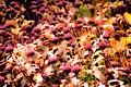 Color Enhanced Wild Flowers DCEN-1.jpg