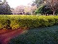 Colorful scenery in Lalbhag.jpg