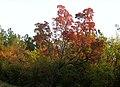 Colori d'Ottobre sul Carso - panoramio.jpg
