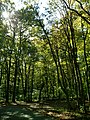 Conemaugh Gap Early Fall 2016 - panoramio - Ron Shawley (22).jpg