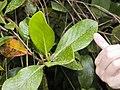 Costa Rica (6110207170).jpg