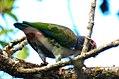 Costa Rica DSCN2330-new (30762133710).jpg