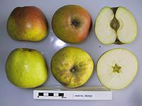 Cross section of Angyal Dezso, National Fruit Collection (acc. 1948-344).jpg