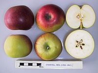 Cross section of Chaxhill Red, National Fruit Collection (acc. 1952-052).jpg