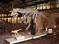 Cryolophosaurus skeleton reconstruction.jpg
