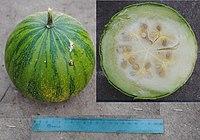 Cucurbita ecuadorensis (Cutler & Whitaker) mature fruit 2 merged pictures.jpg