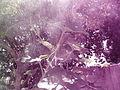 """Cucurbita maxima """"zapallo plomo"""" (Costanzi temp2) flor femenina F03 dia01 pétalos cerrados orientación.JPG"""